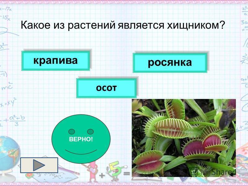 Какое из растений является хищником? крапива осот росянка ВЕРНО!