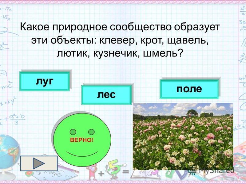 Какое природное сообщество образует эти объекты: клевер, крот, щавель, лютик, кузнечик, шмель? лес поле луг ВЕРНО!