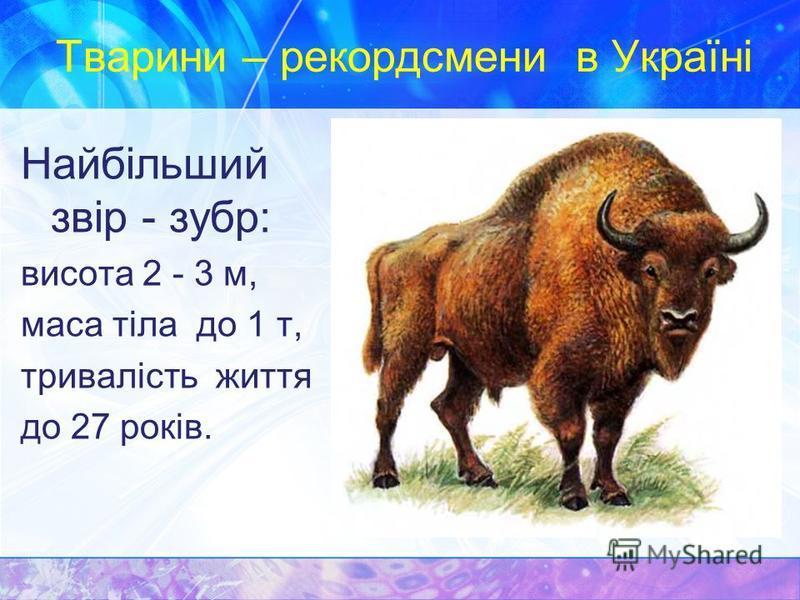 Тварини – рекордсмени в Україні Найбільший звір - зубр: висота 2 - 3 м, маса тіла до 1 т, тривалість життя до 27 років.