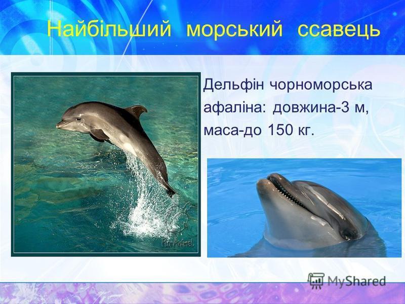 Найбільший морський ссавець Дельфін чорноморська афаліна: довжина-3 м, маса-до 150 кг.