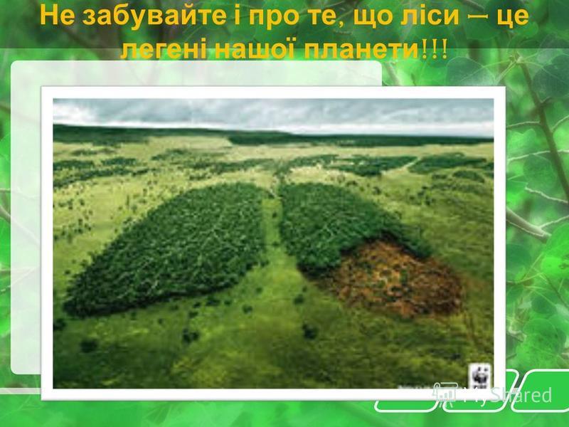 Ліс приносить нам не лише матеріальні блага, а й дає можливість відпочити душею
