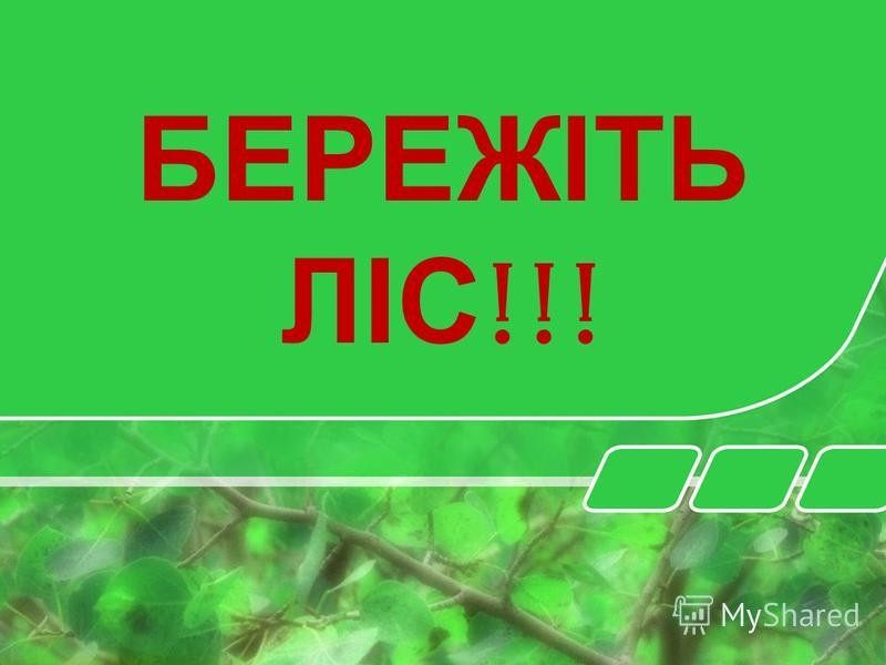 Не забувайте і про те, що ліси – це легені нашої планети !!!
