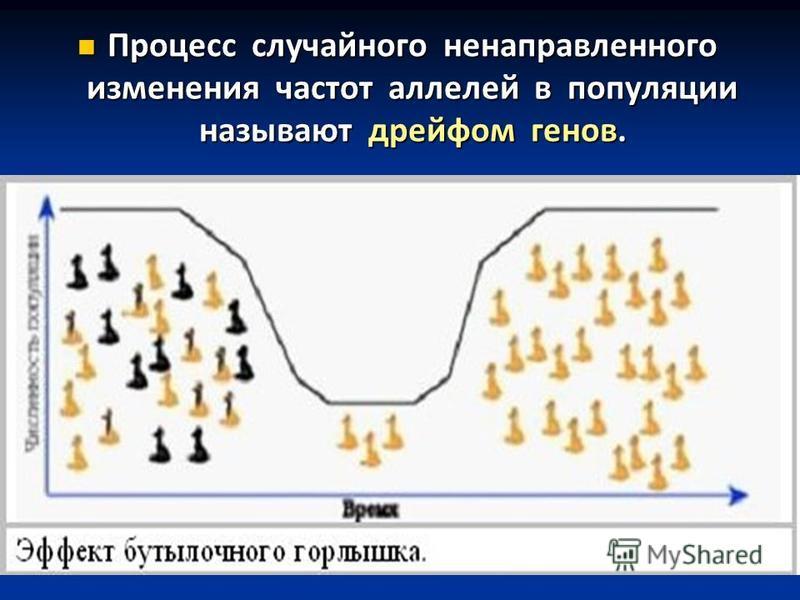 Процесс случайного ненаправленного изменения частот аллелей в популяции называют дрейфом генов. Процесс случайного ненаправленного изменения частот аллелей в популяции называют дрейфом генов.