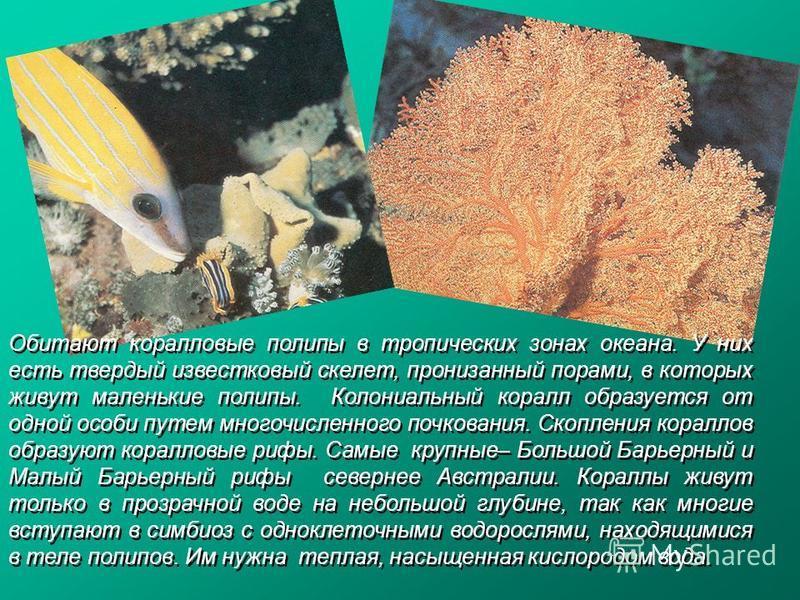 Обитают коралловые полипы в тропических зонах океана. У них есть твердый известковый скелет, пронизанный порами, в которых живут маленькие полипы. Колониальный коралл образуется от одной особи путем многочисленного почкования. Скопления кораллов обра