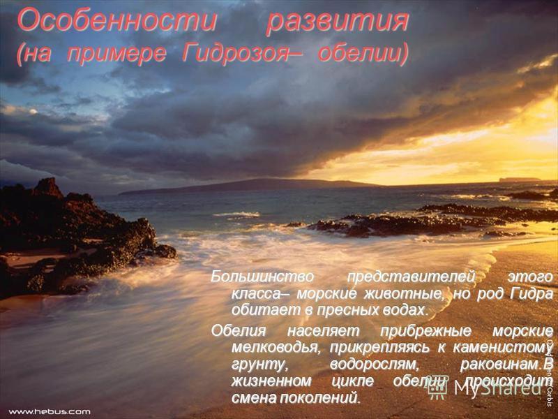 Особенности развития (на примере Гидрозоя– обилие) Большинство представителей этого класса– морские животные, но род Гидра обитает в пресных водах. Обелия населяет прибрежные морские мелководья, прикрепляясь к каменистому грунту, водорослям, раковина