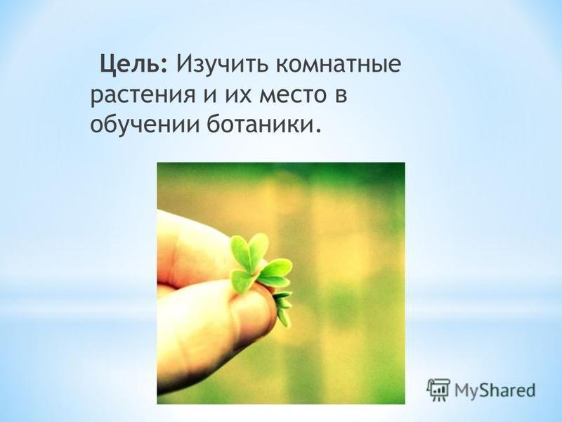 Цель: Изучить комнатные растения и их место в обучении ботаники.