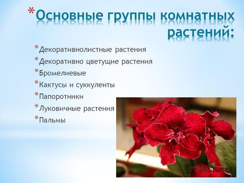 * Декоративнолистные растения * Декоративно цветущие растения * Бромелиевые * Кактусы и суккуленты * Папоротники * Луковичные растения * Пальмы