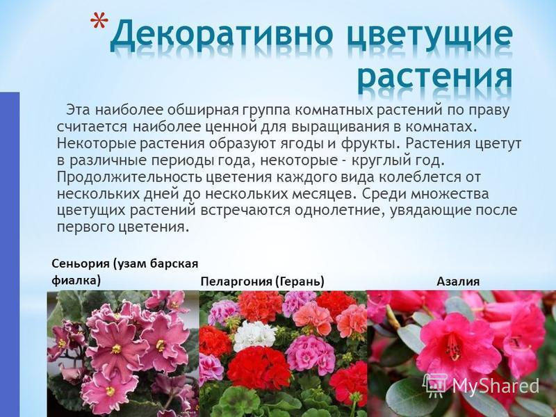Эта наиболее обширная группа комнатных растений по праву считается наиболее ценной для выращивания в комнатах. Некоторые растения образуют ягоды и фрукты. Растения цветут в различные периоды года, некоторые - круглый год. Продолжительность цветения к