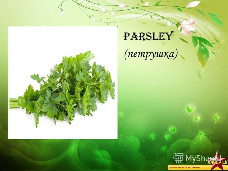 Parsley (петрушка)