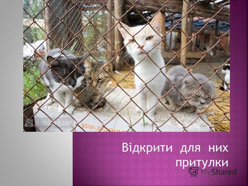 Прибрати з вулиць міста безпритульних тварин.