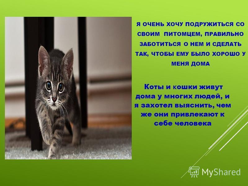 Я ОЧЕНЬ ХОЧУ ПОДРУЖИТЬСЯ СО СВОИМ ПИТОМЦЕМ, ПРАВИЛЬНО ЗАБОТИТЬСЯ О НЕМ И СДЕЛАТЬ ТАК, ЧТОБЫ ЕМУ БЫЛО ХОРОШО У МЕНЯ ДОМА Коты и кошки живут дома у многих людей, и я захотел выяснить, чем же они привлекают к себе человека