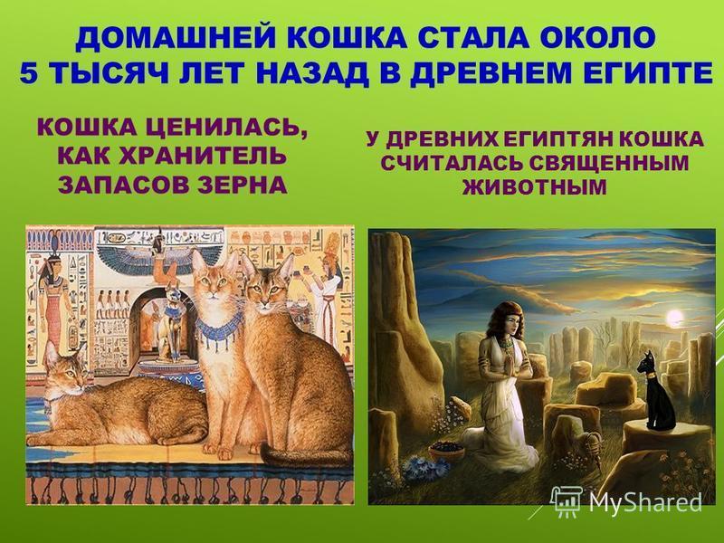 ДОМАШНЕЙ КОШКА СТАЛА ОКОЛО 5 ТЫСЯЧ ЛЕТ НАЗАД В ДРЕВНЕМ ЕГИПТЕ КОШКА ЦЕНИЛАСЬ, КАК ХРАНИТЕЛЬ ЗАПАСОВ ЗЕРНА У ДРЕВНИХ ЕГИПТЯН КОШКА СЧИТАЛАСЬ СВЯЩЕННЫМ ЖИВОТНЫМ