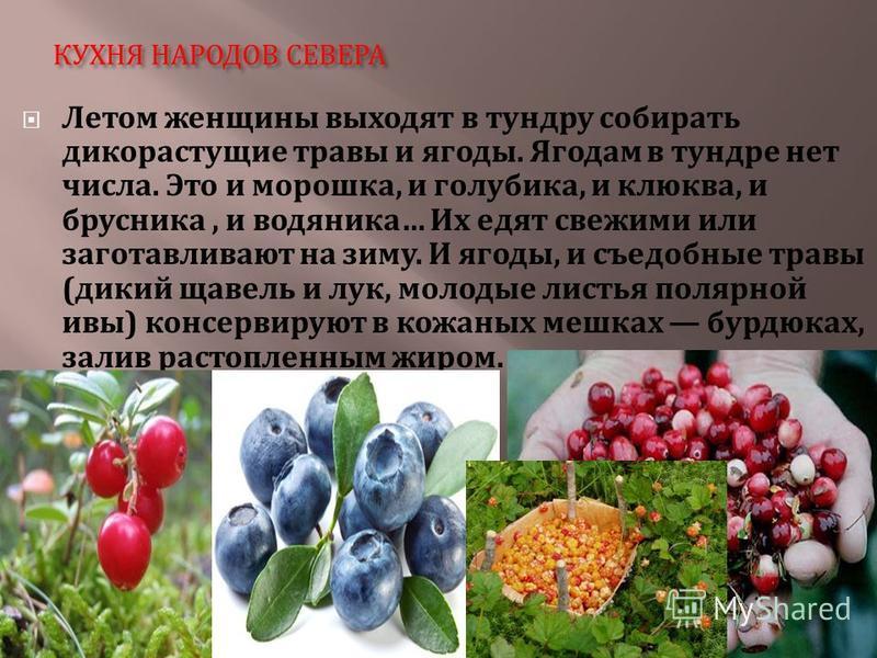 КУХНЯ НАРОДОВ СЕВЕРА Летом женщины выходят в тундру собирать дикорастущие травы и ягоды. Ягодам в тундре нет числа. Это и морошка, и голубика, и клюква, и брусника, и водяника … Их едят свежими или заготавливают на зиму. И ягоды, и съедобные травы (
