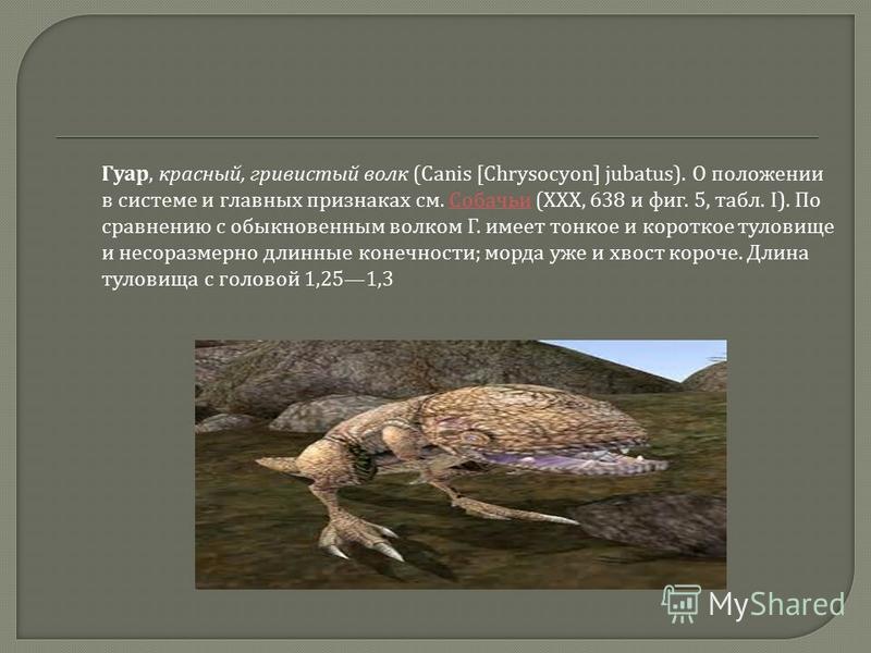 Гуар, красный, гривистый волк (Canis [Chrysocyon] jubatus). О положении в системе и главных признаках см. Собачьи (XXX, 638 и фиг. 5, табл. I). По сравнению с обыкновенным волком Г. имеет тонкое и короткое туловище и несоразмерно длинные конечности ;