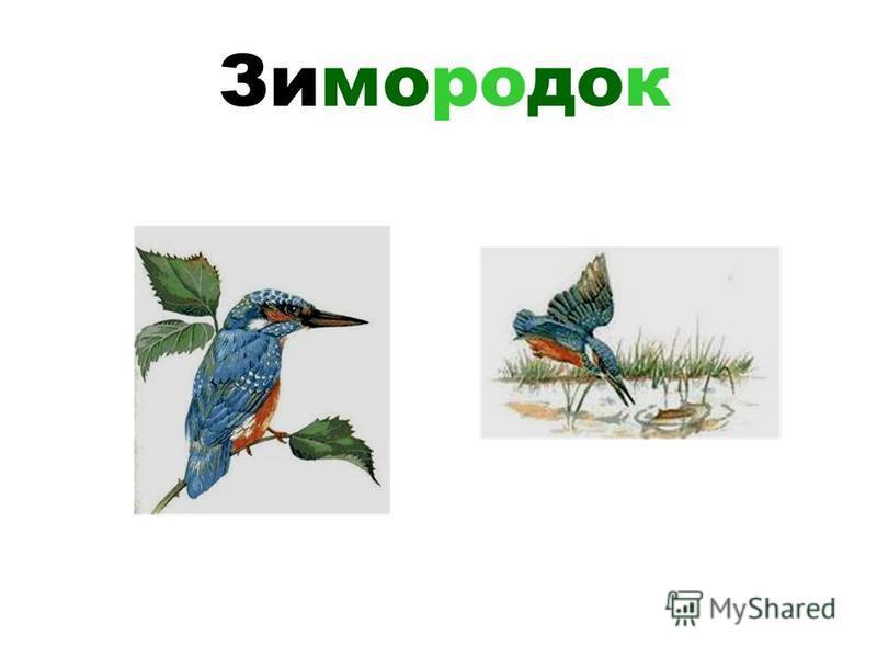 Енот - полоскун