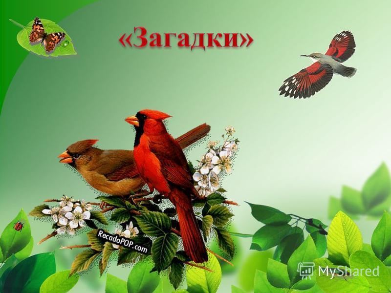Голоса птиц воробей скачать бесплатно mp3