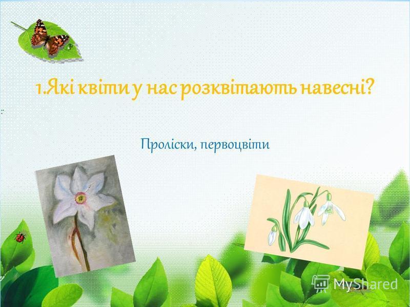 1.Які квіти у нас розквітають навесні? Проліски, первоцвіти