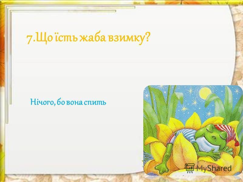 7.Що їсть жаба взимку? Нічого, бо вона спить