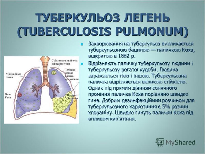 ТУБЕРКУЛЬОЗ ЛЕГЕНЬ (TUBERCULOSIS PULMONUM) Захворювання на туберкульоз викликається туберкульозною бацилою паличкою Коха, відкритою в 1882 р. Захворювання на туберкульоз викликається туберкульозною бацилою паличкою Коха, відкритою в 1882 р. Відрізняю