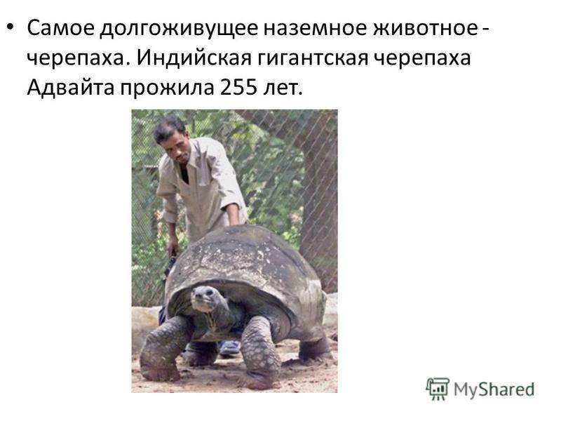 Самое долгоживущее наземное животное - черепаха. Индийская гигантская черепаха Адвайта прожила 255 лет.
