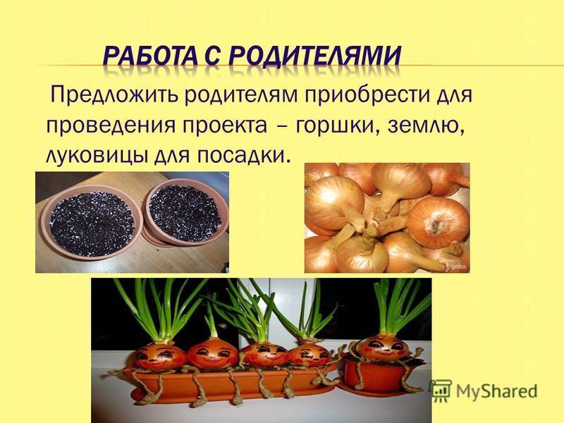 Предложить родителям приобрести для проведения проекта – горшки, землю, луковицы для посадки.