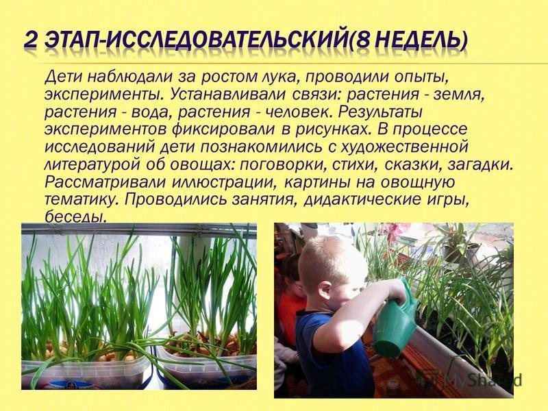 Дети наблюдали за ростом лука, проводили опыты, эксперименты. Устанавливали связи: растения - земля, растения - вода, растения - человек. Результаты экспериментов фиксировали в рисунках. В процессе исследований дети познакомились с художественной лит