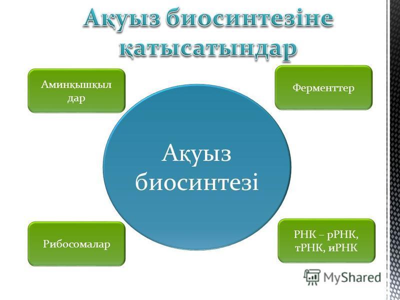 Амин қ ыш қ ыл дар Ферменттер Рибосомалар РНК – рРНК, тРНК, иРНК А қ уыз биосинтезі