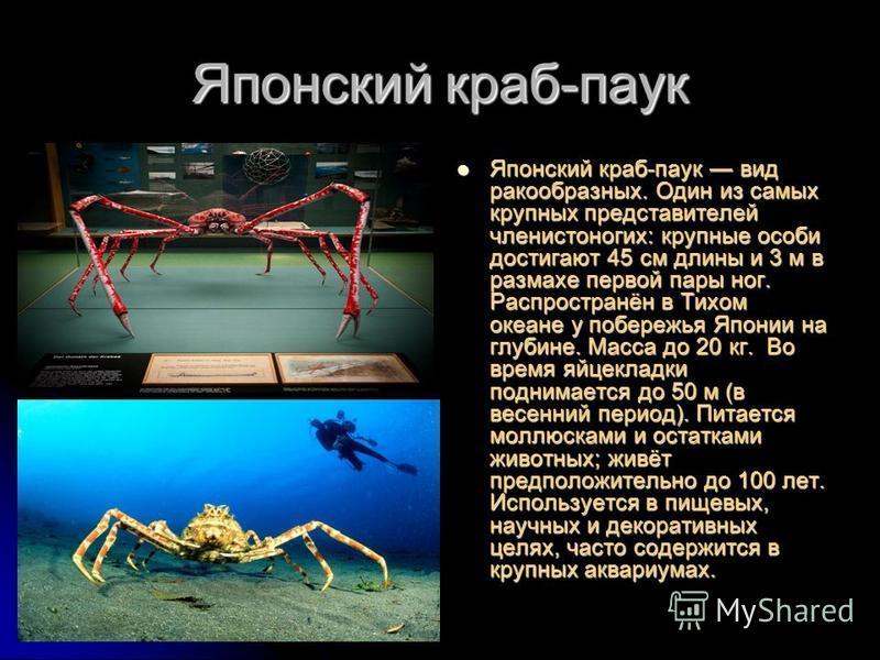 Японский краб-паук Японский краб-паук вид ракообразных. Один из самых крупных представителей членистоногих: крупные особи достигают 45 см длины и 3 м в размахе первой пары ног. Распространён в Тихом океане у побережья Японии на глубине. Масса до 20 к