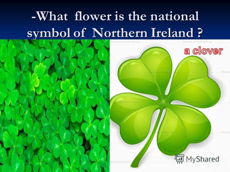 -What flower is the national symbol of Northern Ireland ?