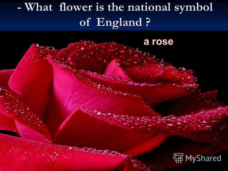 - What flower is the national symbol of England ?