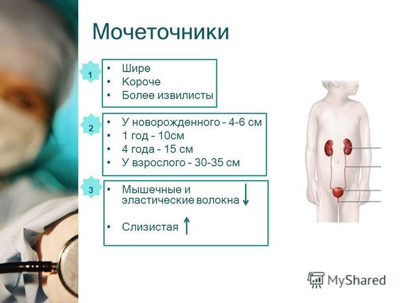 Мочеточники Шире Короче Более извилисты У новорожденного – 4-6 см 1 год – 10 см 4 года – 15 см У взрослого – 30-35 см Мышечные и эластические волокна Слизистая 1 2 3