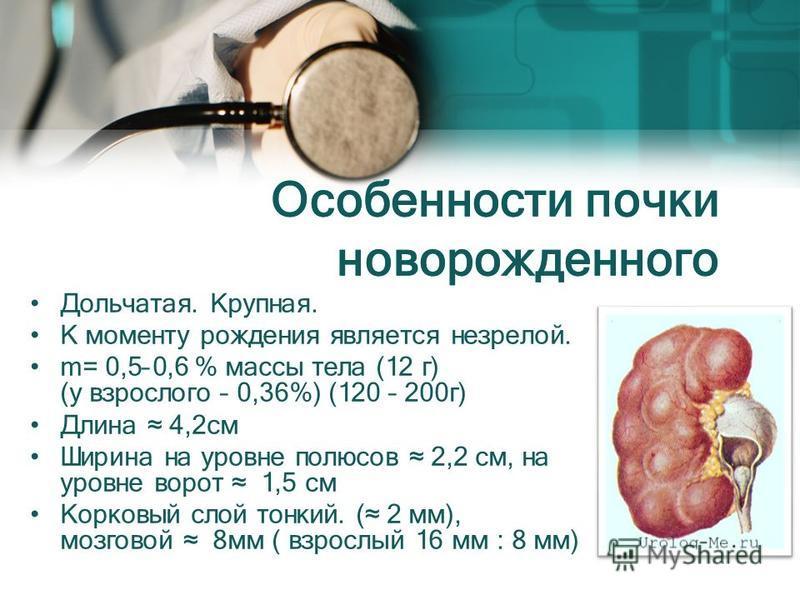 Особенности почки новорожденного Дольчатая. Крупная. К моменту рождения является незрелой. m= 0,5–0,6 % массы тела (12 г) (у взрослого – 0,36%) (120 – 200 г) Длина 4,2 см Ширина на уровне полюсов 2,2 см, на уровне ворот 1,5 см Корковый слой тонкий. (