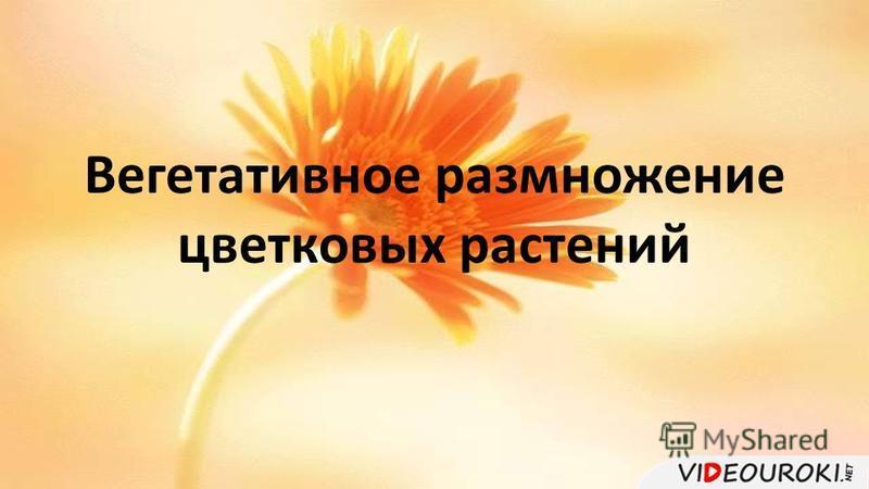 Вегетативное размножение цветковых растений