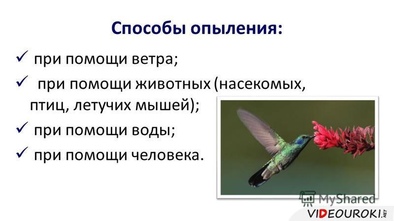 Способы опыления: при помощи ветра; при помощи животных (насекомых, птиц, летучих мышей); при помощи воды; при помощи человека.