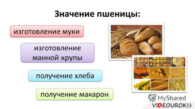 Значение пшеницы: изготовление муки изготовление манной крупы получение хлеба получение макарон