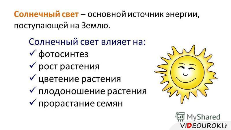 Солнечный свет – основной источник энергии, поступающей на Землю. Солнечный свет влияет на: фотосинтез рост растения цветение растения плодоношение растения прорастание семян
