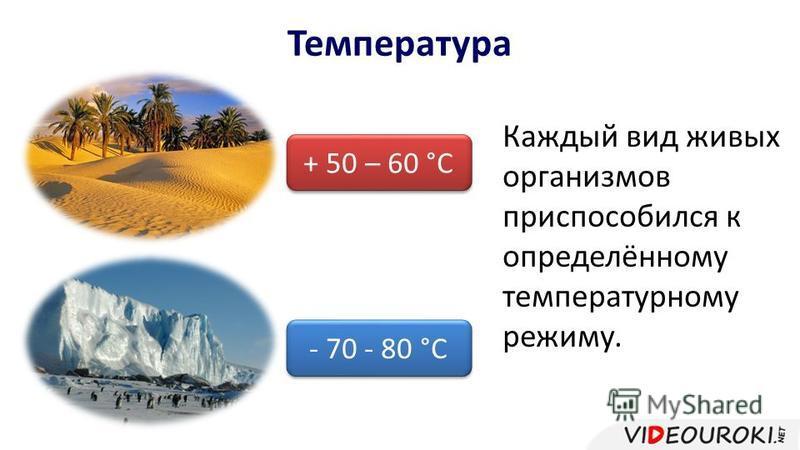 Температура + 50 – 60 °С - 70 - 80 °С Каждый вид живых организмов приспособился к определённому температурному режиму.