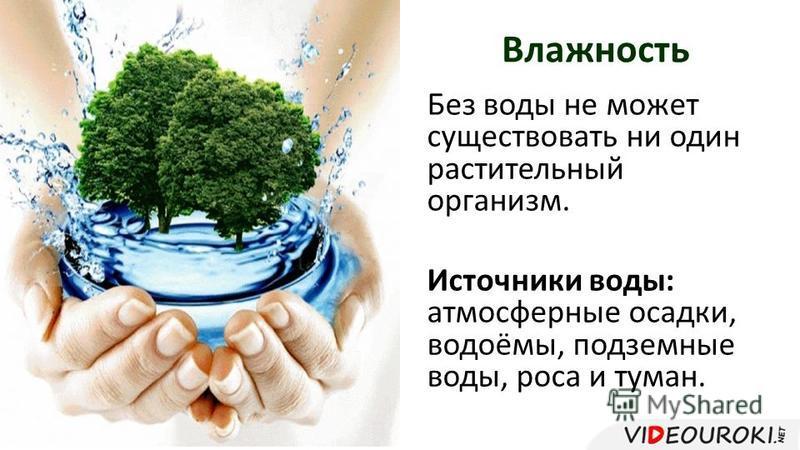 Влажность Без воды не может существовать ни один растительный организм. Источники воды: атмосферные осадки, водоёмы, подземные воды, роса и туман.