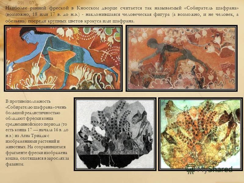 Наиболее ранней фреской в Кносском дворце считается так называемый «Собиратель шафрана» (возможно, 18 или 17 в. до н.э.) - наклонившаяся человеческая фигура (а возможно, и не человек, а обезьяна) посреди крупных цветов крокуса или шафрана. В противоп