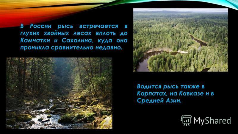 В России рысь встречается в глухих хвойных лесах вплоть до Камчатки и Сахалина, куда она проникла сравнительно недавно. Водится рысь также в Карпатах, на Кавказе и в Средней Азии.