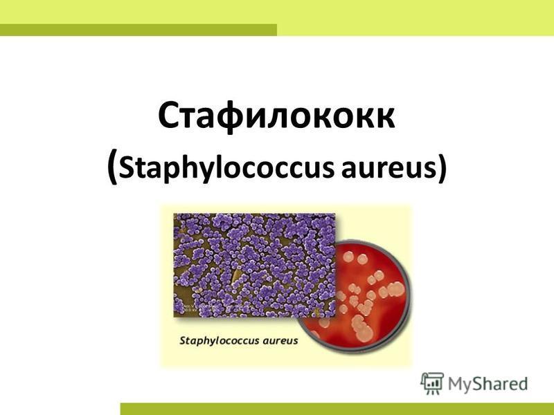 Стафилококк ( Staphylococcus aureus)