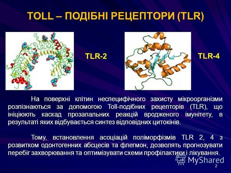 2 TOLL – ПОДІБНІ РЕЦЕПТОРИ (TLR) TLR-2 TLR-4 На поверхні клітин неспецифічного захисту мікроорганізми розпізнаються за допомогою Toll-подібних рецепторів (TLR), що ініціюють каскад прозапальних реакцій вродженого імунітету, в результаті яких відбуває