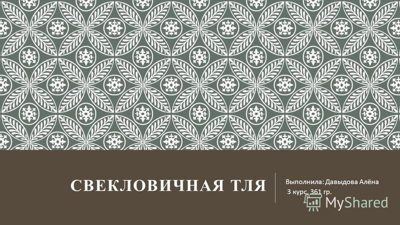 СВЕКЛОВИЧНАЯ ТЛЯ Выполнила : Давыдова Алёна 3 курс, 361 гр.