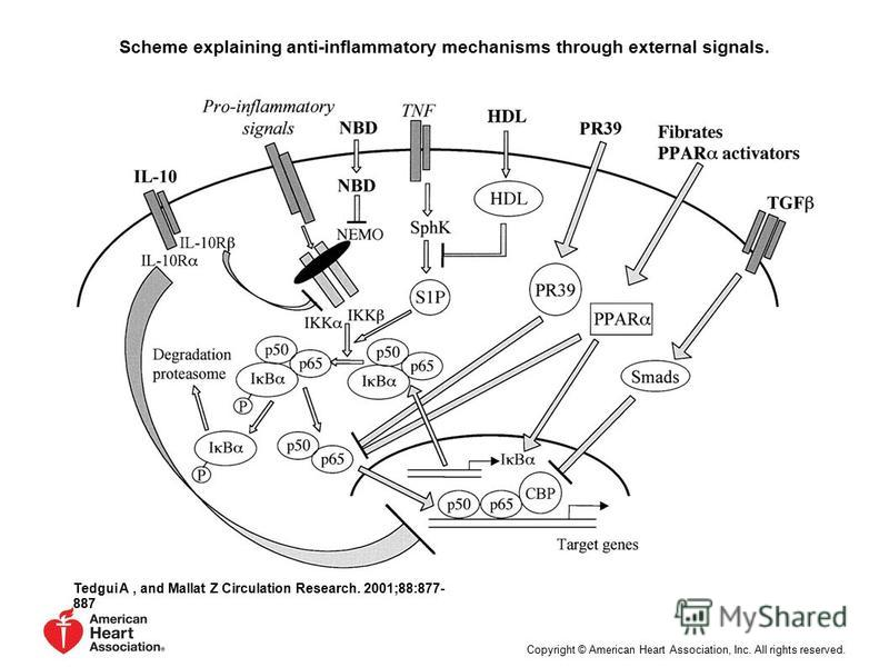 Scheme explaining anti-inflammatory mechanisms through external signals. Tedgui A, and Mallat Z Circulation Research. 2001;88:877- 887 Copyright © American Heart Association, Inc. All rights reserved.