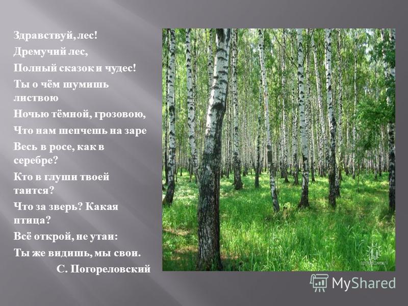 Здравствуй, лес ! Дремучий лес, Полный сказок и чудес ! Ты о чём шумишь листвою Ночью тёмной, грозовою, Что нам шепчешь на заре Весь в росе, как в серебре ? Кто в глуши твоей таится ? Что за зверь ? Какая птица ? Всё открой, не утаи : Ты же видишь, м