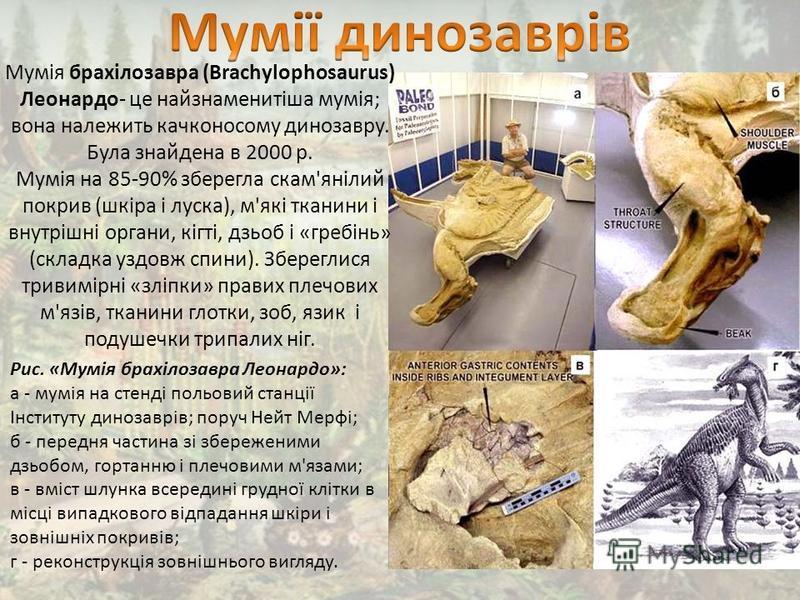 Мумія брахілозавра (Brachylophosaurus) Леонардо- це найзнаменитіша мумія; вона належить качконосому динозавру. Була знайдена в 2000 р. Мумія на 85-90% зберегла скам'янілий покрив (шкіра і луска), м'які тканини і внутрішні органи, кігті, дзьоб і «греб