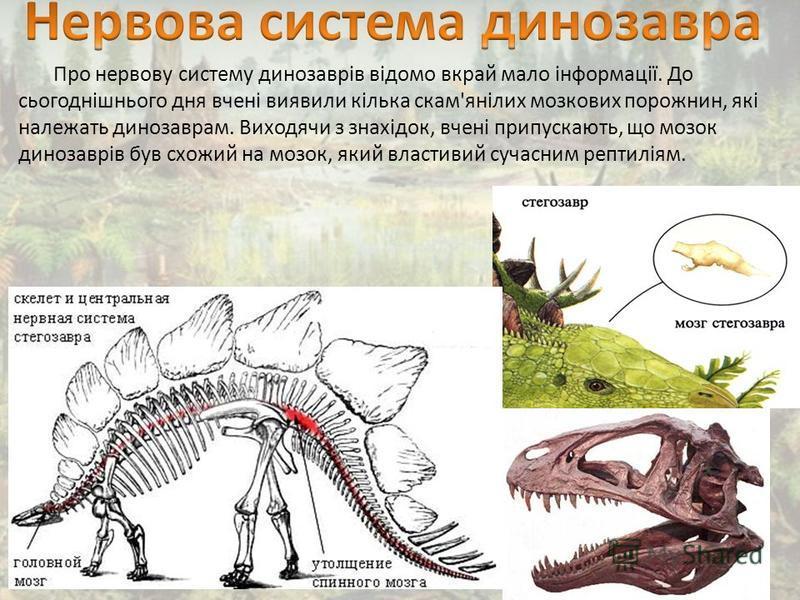 Про нервову систему динозаврів відомо вкрай мало інформації. До сьогоднішнього дня вчені виявили кілька скам'янілих мозкових порожнин, які належать динозаврам. Виходячи з знахідок, вчені припускають, що мозок динозаврів був схожий на мозок, який влас
