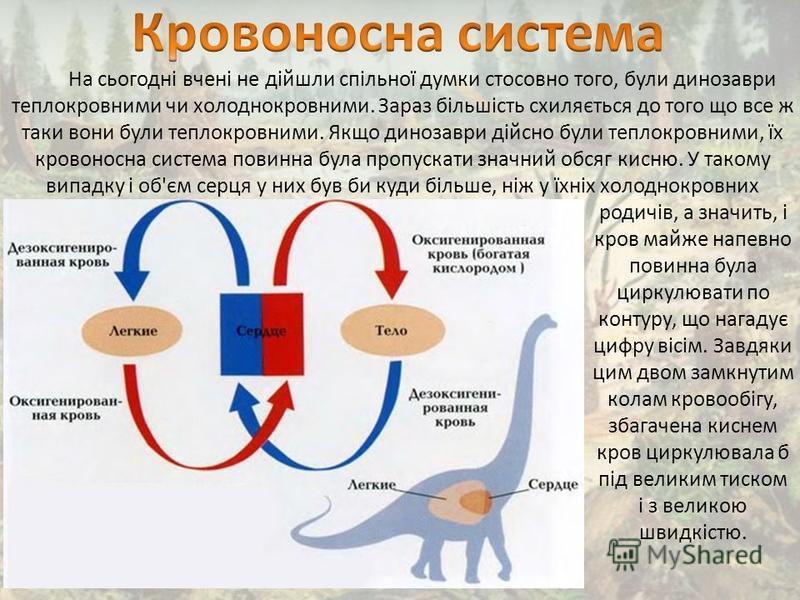 На сьогодні вчені не дійшли спільної думки стосовно того, були динозаври теплокровними чи холоднокровними. Зараз більшість схиляється до того що все ж таки вони були теплокровними. Якщо динозаври дійсно були теплокровними, їх кровоносна система повин