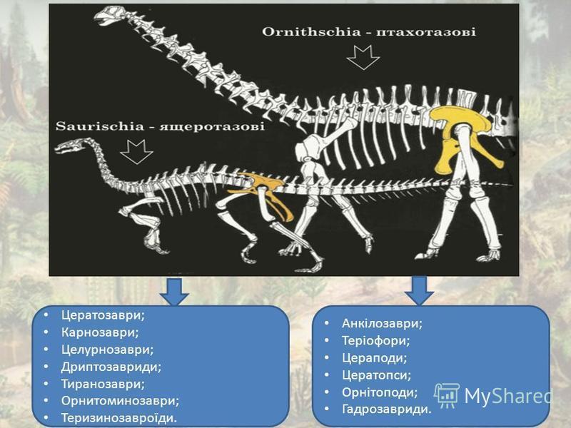 Цератозаври; Карнозаври; Целурнозаври; Дриптозавриди; Тиранозаври; Орнитоминозаври; Теризинозавроїди. Анкілозаври; Теріофори; Цераподи; Цератопси; Орнітоподи; Гадрозавриди.