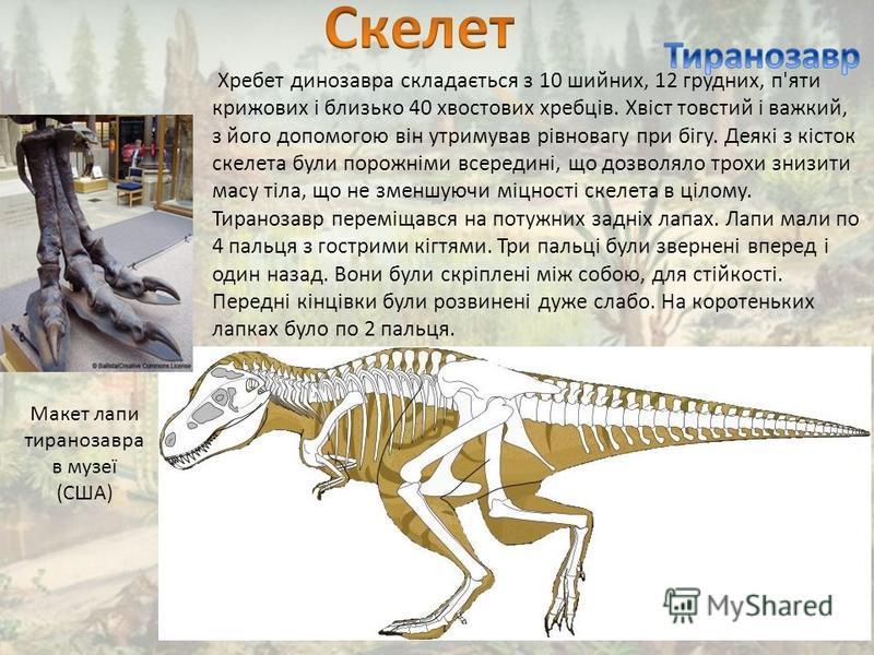 Хребет динозавра складається з 10 шийних, 12 грудних, п'яти крижових і близько 40 хвостових хребців. Хвіст товстий і важкий, з його допомогою він утримував рівновагу при бігу. Деякі з кісток скелета були порожніми всередині, що дозволяло трохи знизит
